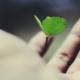 Green leaf floating above hand